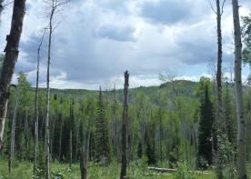 Maxson Mineral Boundary Surveys