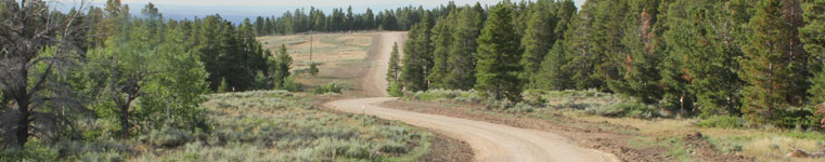 Civil Engineering and Surveying Resources - Image of Natrona County road and trees