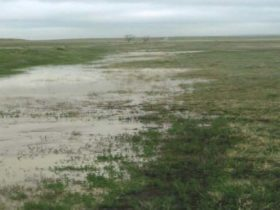 Flooding field showing result of waterline break. WLC served as grants writer to secure funding to replace the waterline.