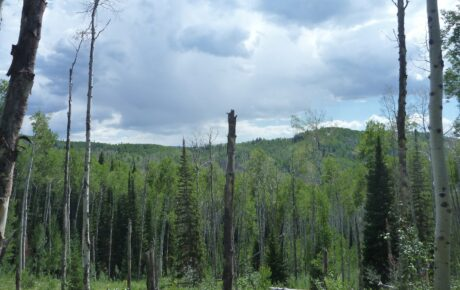 5 Best Land Surveying Views!